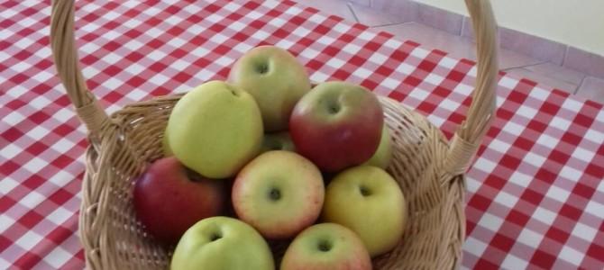 Svjetski dan jabuka – kraljice voća
